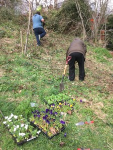Darlington Dene's Project 20th March 2017 - Planting